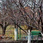 Зачем белят деревья? Почему и чем осенью и весной в городах и огородах белить деревья?