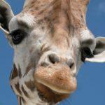 Очень интересные факты о животных, которые вы не знали — презентация, скачать бесплатно онлайн