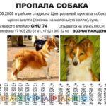 Пропала собака — детская песня из мультфильма скачать смотреть бесплатно онлайн, текст песни