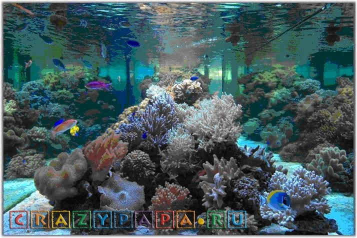 Морской океанариум в Москве - цены, адрес