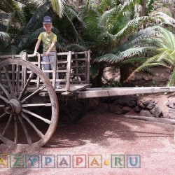 Старая тележка среди пальм