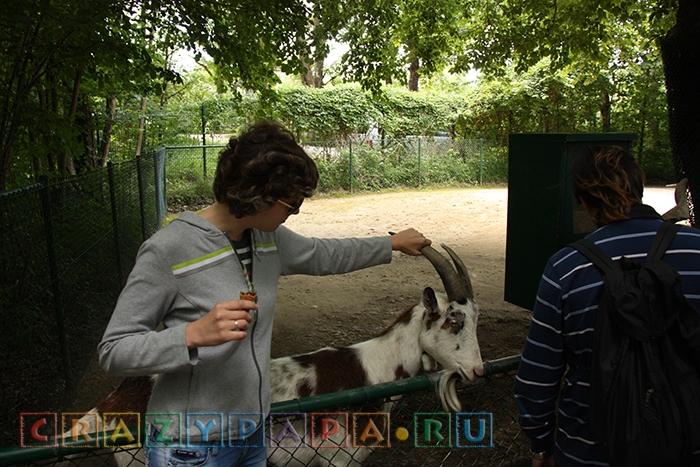 Взять козла за рога в Мюнхенском зоопарке!