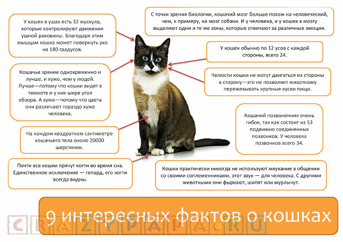 9 фактов о кошках