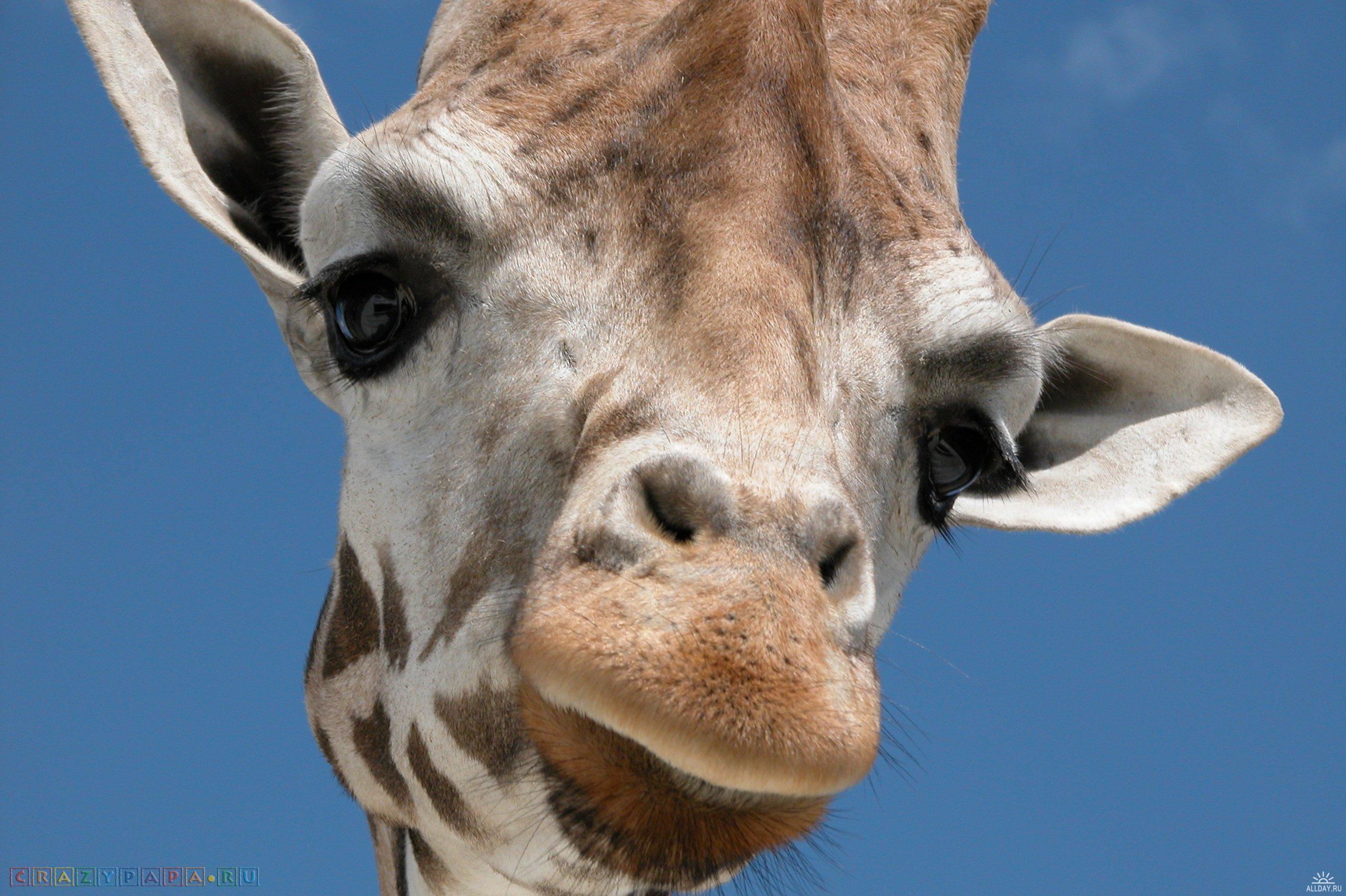 Очень интересные факты о животных, которые вы не знали