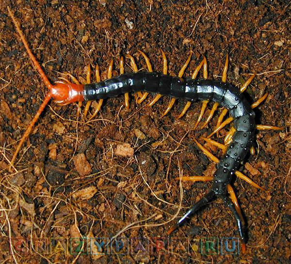 Битвы пауков и животных с насекомыми. Тарантул против скорпиона, многоножка против Богомола и другие бои.