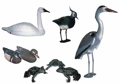 Это изображение также находится в архивах: все декоративные птицы с фото.