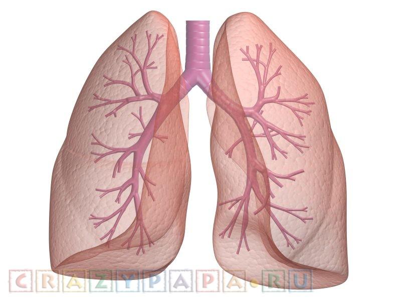 Как улучшить вентиляцию легких